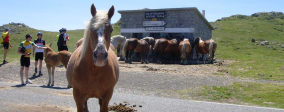 Chevaux at Port De Pailhere - Topbike Picinic
