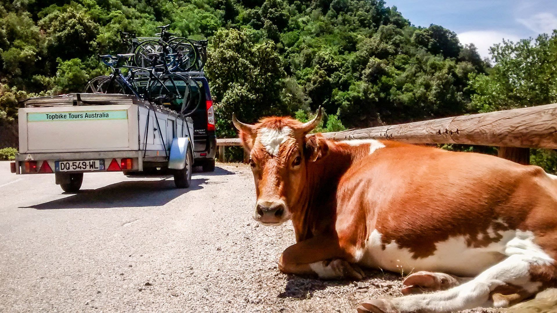 Don't be a Lazy Cow - Start planning your next Tour with Topbike Tours Australia - Fully Supported European Cycling Holidays